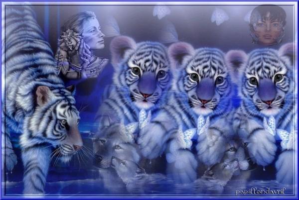 Fond Ecran Tigre Blanc